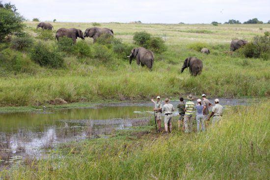 Elefanten beobachten auf einer Buschwanderung im Kapama Private Game Reserve
