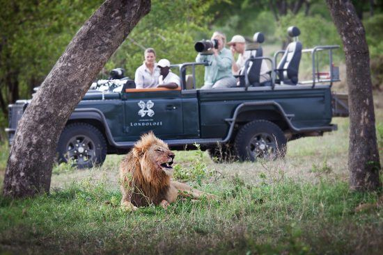 Londolozi Safari in Kruger with lions