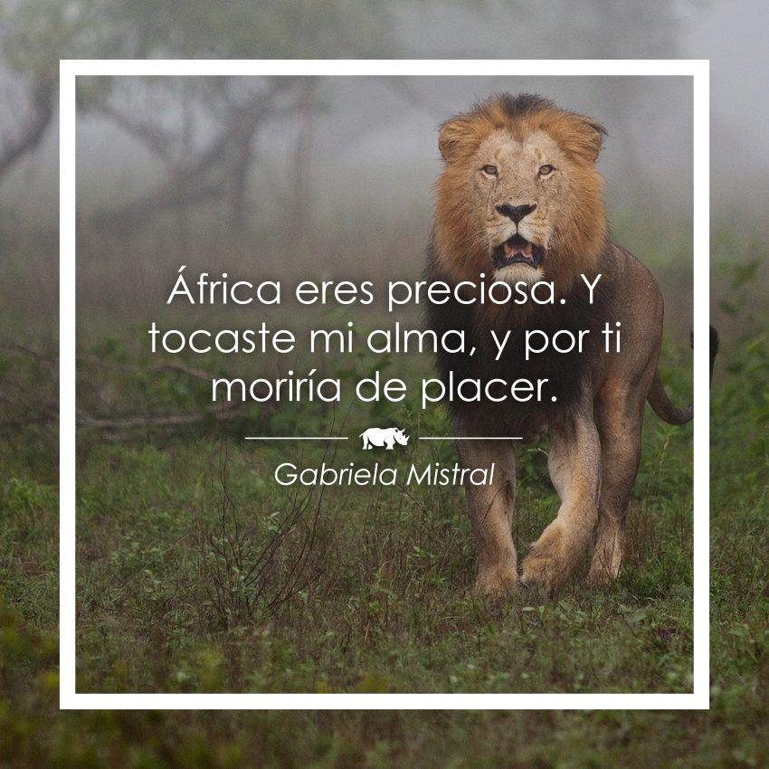 15 Frases Sobre áfrica Para Querer Volar Rhino Africa Blog