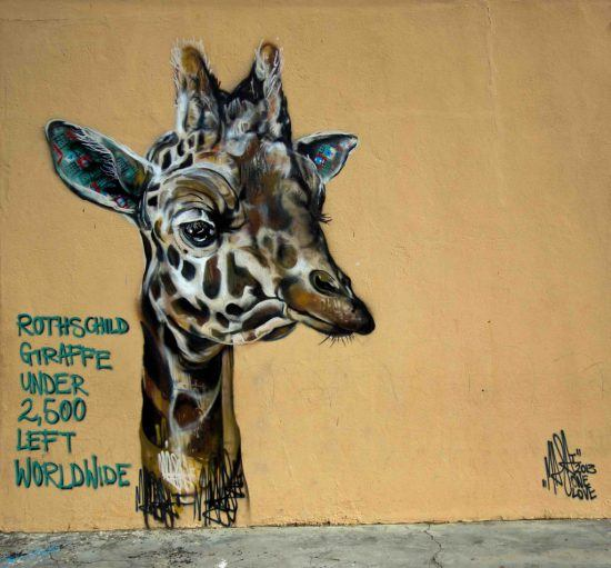 Giraffen-Graffitti in Woodstock, Kapstadt: Es existieren weniger als 2500 Rothschild Giraffen