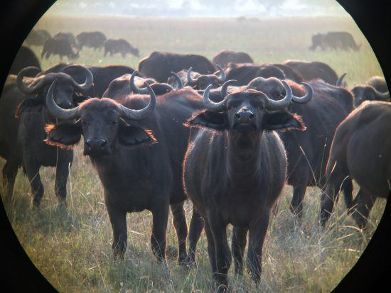 iphone photography binoculars buffalo
