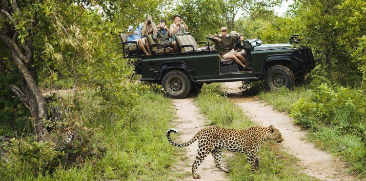Safari-Urlauber in einem offenen Geländewagen beobachten einen Leoparden