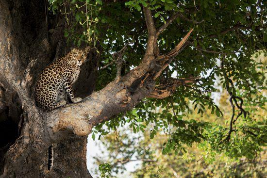 In Botswana wird die Sehnsucht nach Wildnis gestillt.
