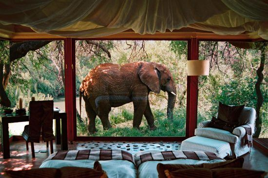 Elephant just behind the windows of Makanyane Safari Lodge