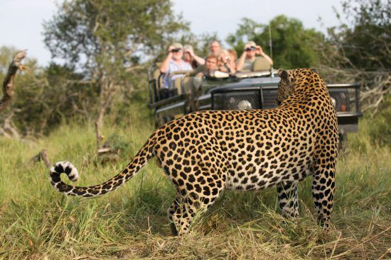 Unbelievable leopard sightings at Mala Mala Game Reserve