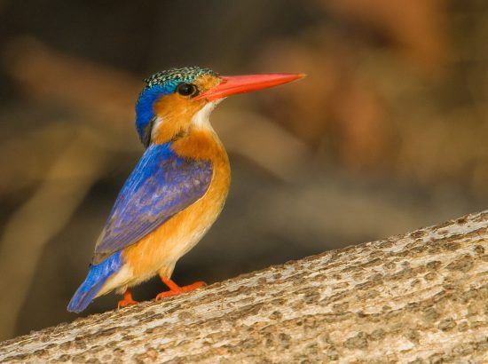 Kingfisher sighting at Sabi Sabi Bush Lodge