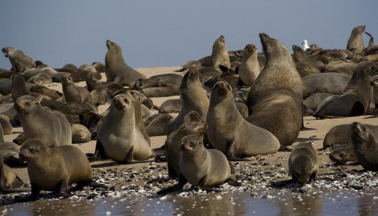 The amazing seal colony in Namibia