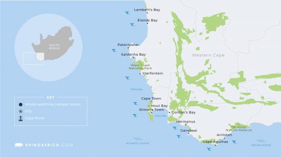 A map for whale-watching in South Africa  with the best regions for whale watching