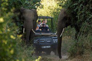 Un 4x4 rencontre deux éléphants lors d'un safari en Afrique