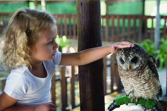 Children can enounter owls at Eagle Encounters at Spier