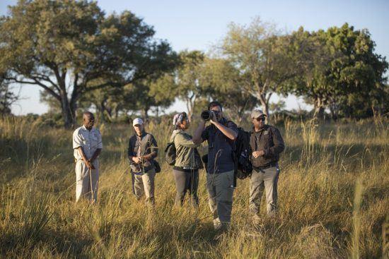 Safari à pied au Botswana dans le Delta de l'Okavango, à la recherche des éléphants