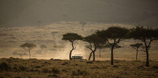 Ein Auto fahrt durch die Masai Mara zwischen trockenen Bäumen