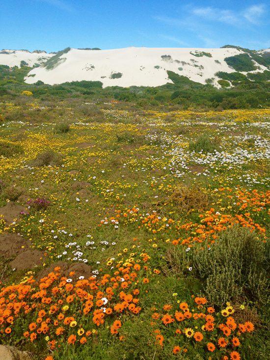Postberg, uma seção do Parque Nacional da Costa Oeste com paisagens espetaculares