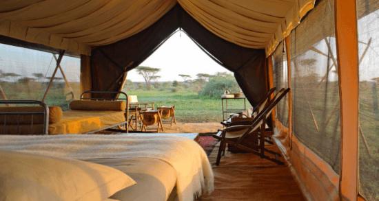Zwei Betten in einem Zelt, offene Tür in die grüne Wildnis