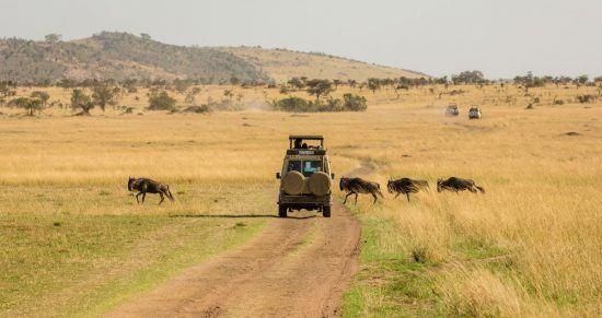 Ein Geländewagen auf einer Straße in der Wüste und 4 Büffel