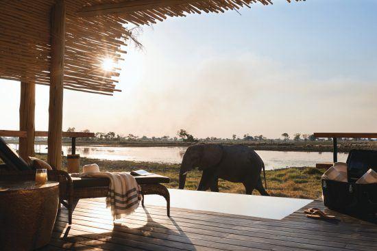 Bei der Eagle Island Lodge schauen auch mal Elefanten vorbei.