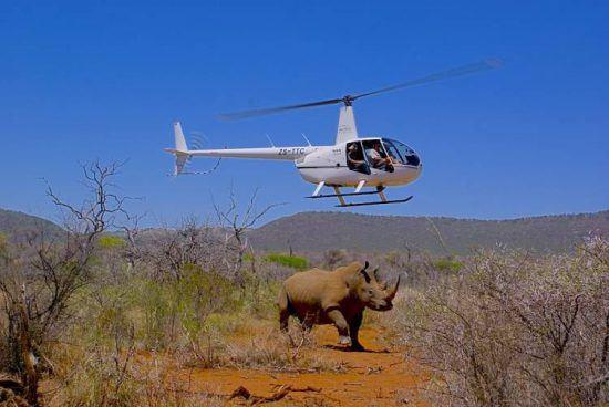 Um pouco mais aventureira do que a opção anterior, uma excursão de helicóptero proporciona vistas igualmente impressionantes da vida selvagem