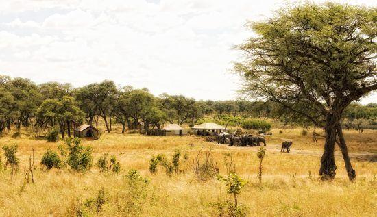 Im Somalisa Camp ist man den Grauen Riesen ganz nah.