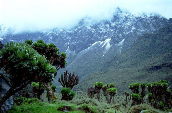 Das schneebedeckte Ruwenzori-Gebirge in Uganda umhüllt von Nebel