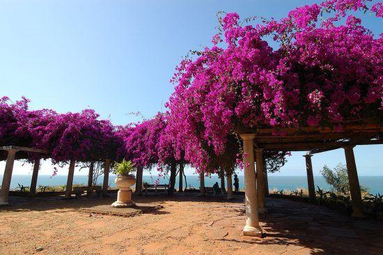 Flowers in Maputo