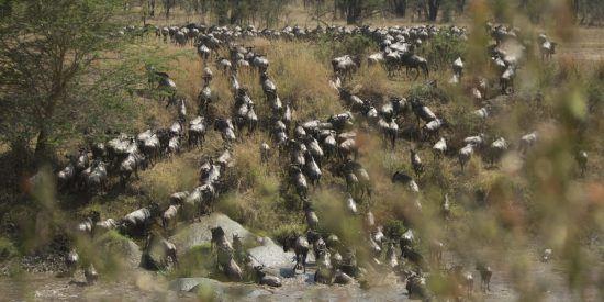 A Grande Migração, Parque Nacional do Serengueti
