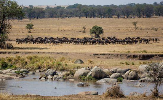 Great Migration Safari in the Serengeti, Tanzania