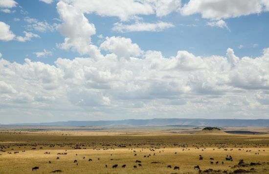 Views of the Serengeti from the Maasai Mara during the Great Wildebeest Migration
