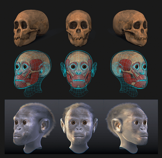 Taung child Facial forensic reconstruction