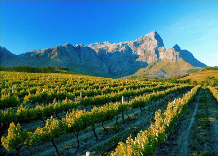 Vineyards of the Franschhoek winelands