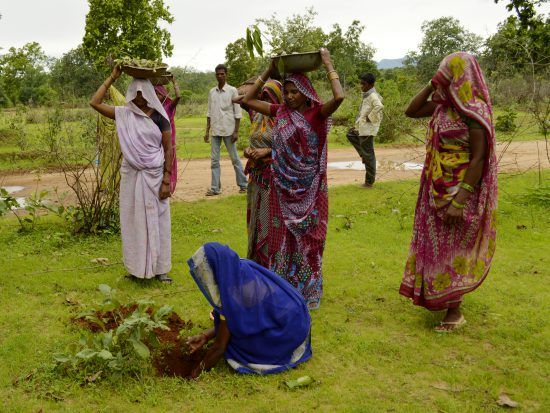 Reforestation efforts  in India