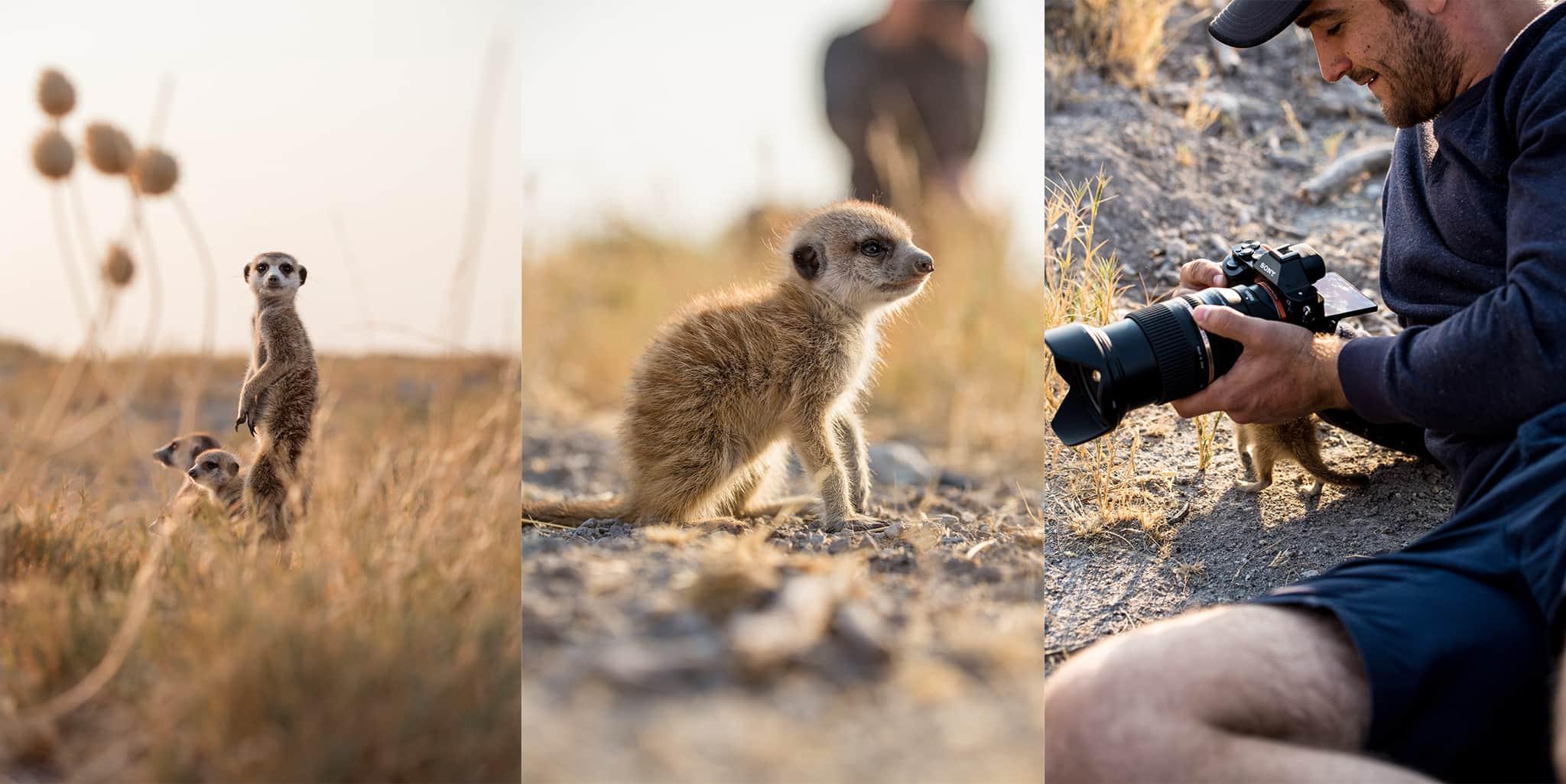 baby meerkat closeup Jacks Camp Botswana
