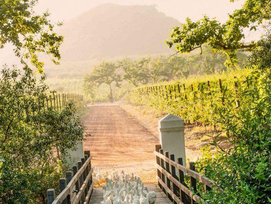 Babylonstoren gates to their vineyard.