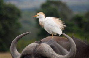 Imagen de la Reserva de Animales Lalibela