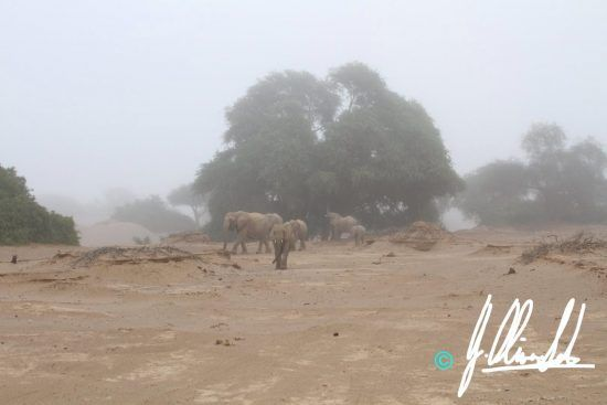 Elephant in the mist in Namibia