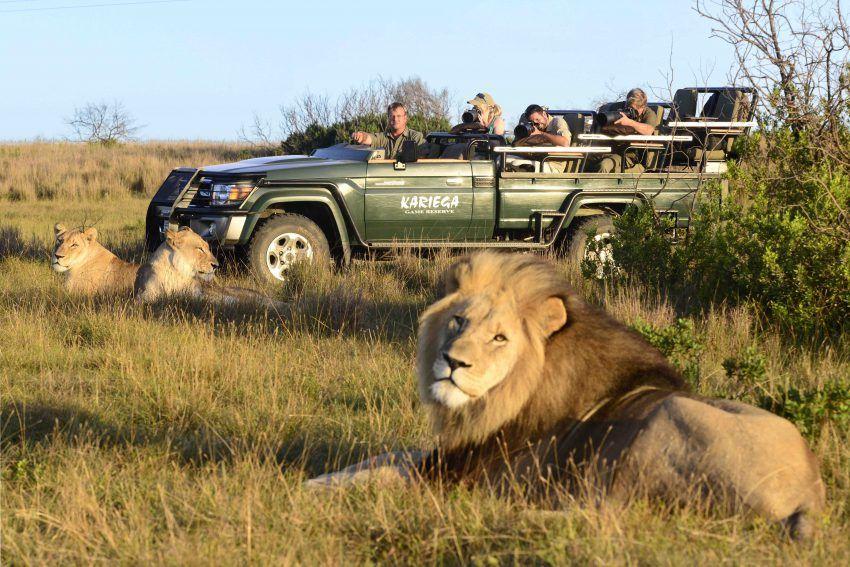 Resultado de imagen de safari