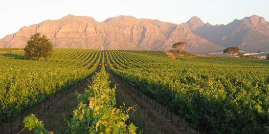 Vineyard and mountain views at Majeka House