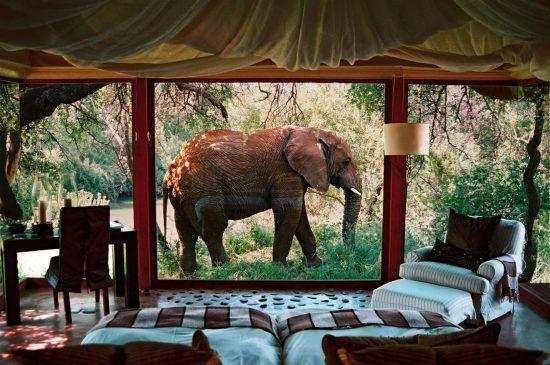 Elefante passando na frente de uma acomodação no Maknyane Safari Lodge