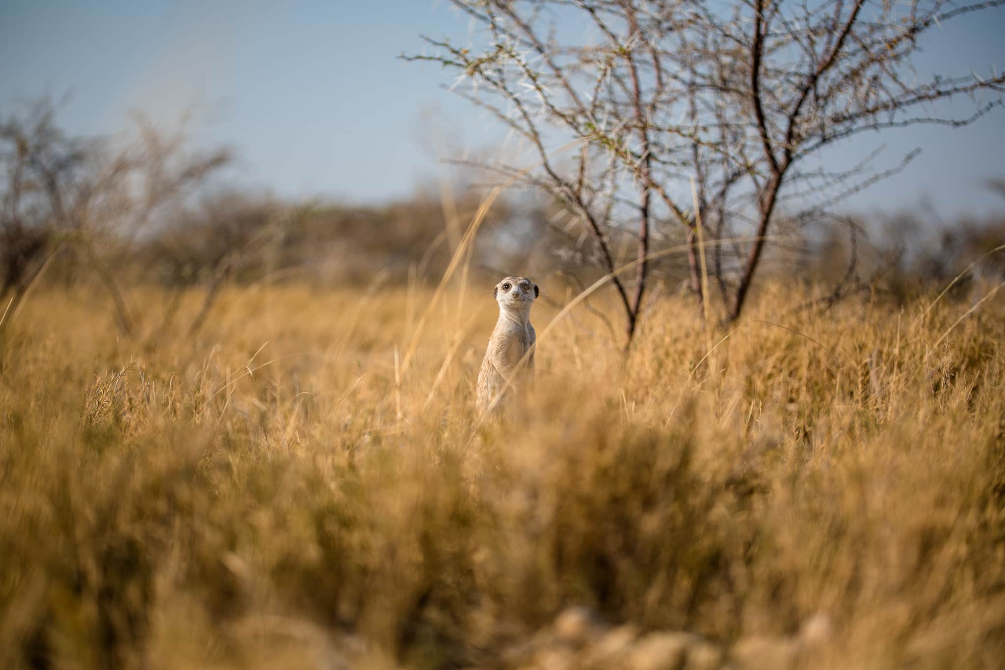 meerkat Jacks Camp Botswana
