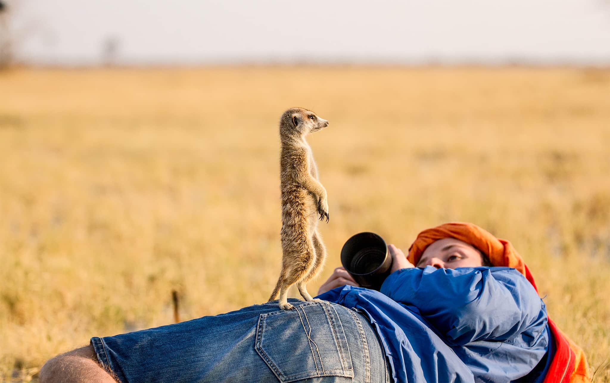meerkat on man Jacks Camp Botswana
