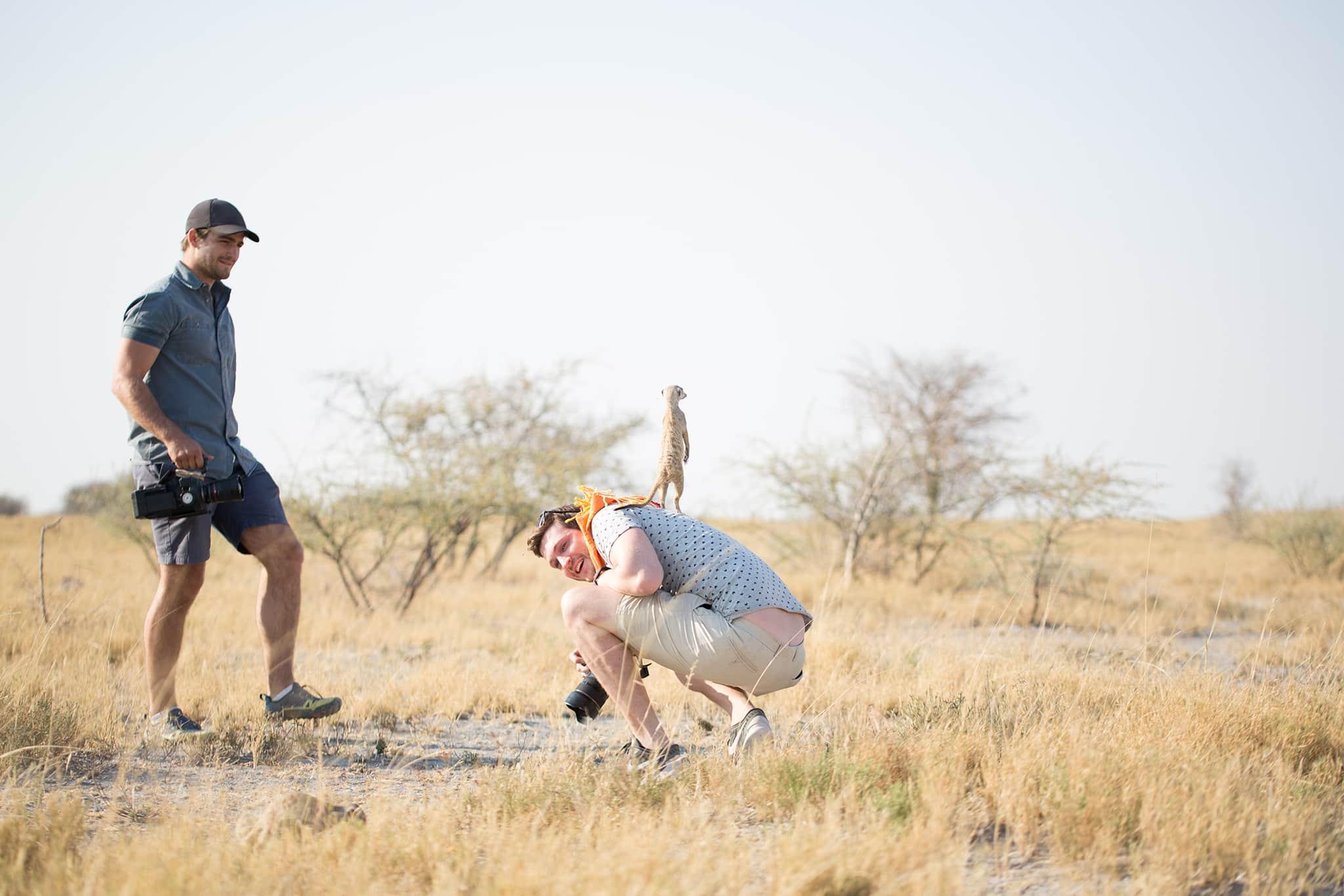 meerkat stands on top of man Jack's Camp, Botswana