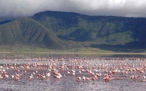 Flamingos in the Ngorongoro Crater lake