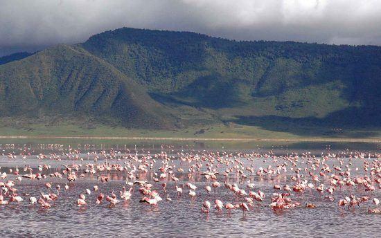 Flamingos in the Ngorongoro Crater during the rainy season