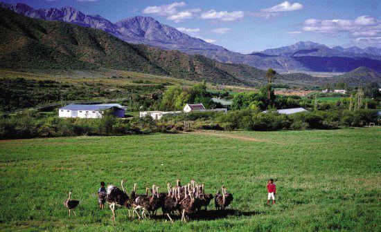 Fazenda de avestruz, Oudtshoorn