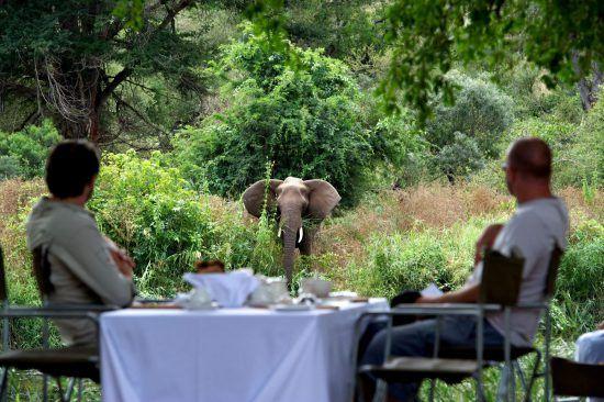Casal observa elefante durante refeição diurna no Singita Lebombo Lodge
