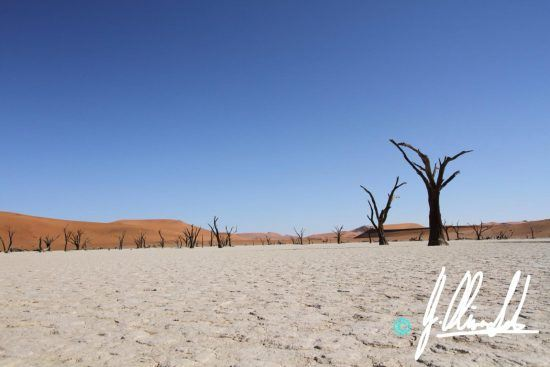 The skeleton forest in the Kalahari of Namibia