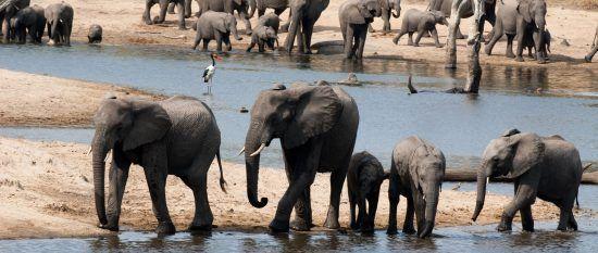 A herd of elephants drinking water at a steam near Ulusaba Rock Lodge