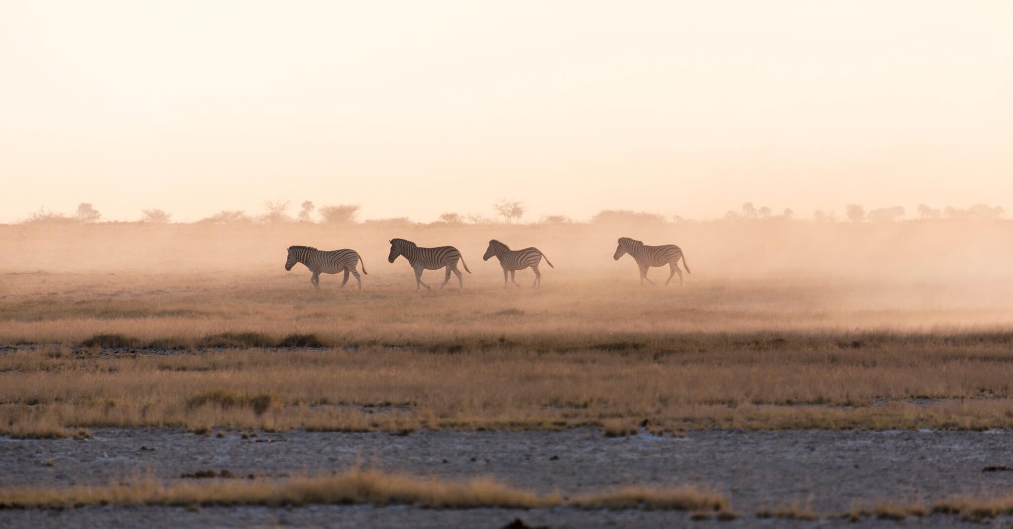 zebras em Jacks Camp, Botsuana