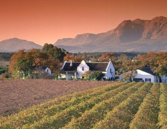 Kap-Weinland: Weinreben und weißes Farmhaus bei Sonnenuntergang