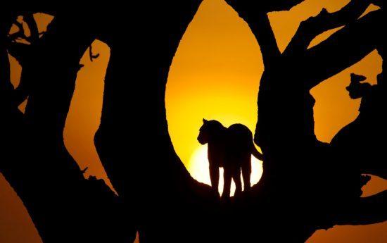 Leobardenschatten bei Sonnenuntergang