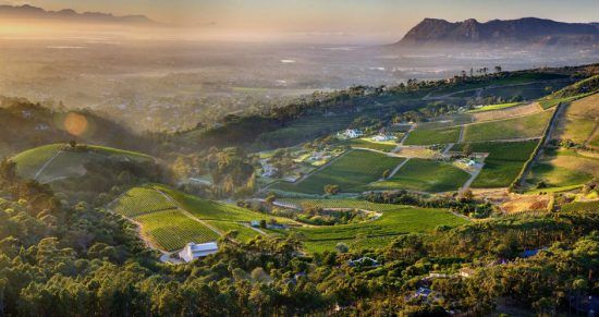 The view from Constantia Glen winery